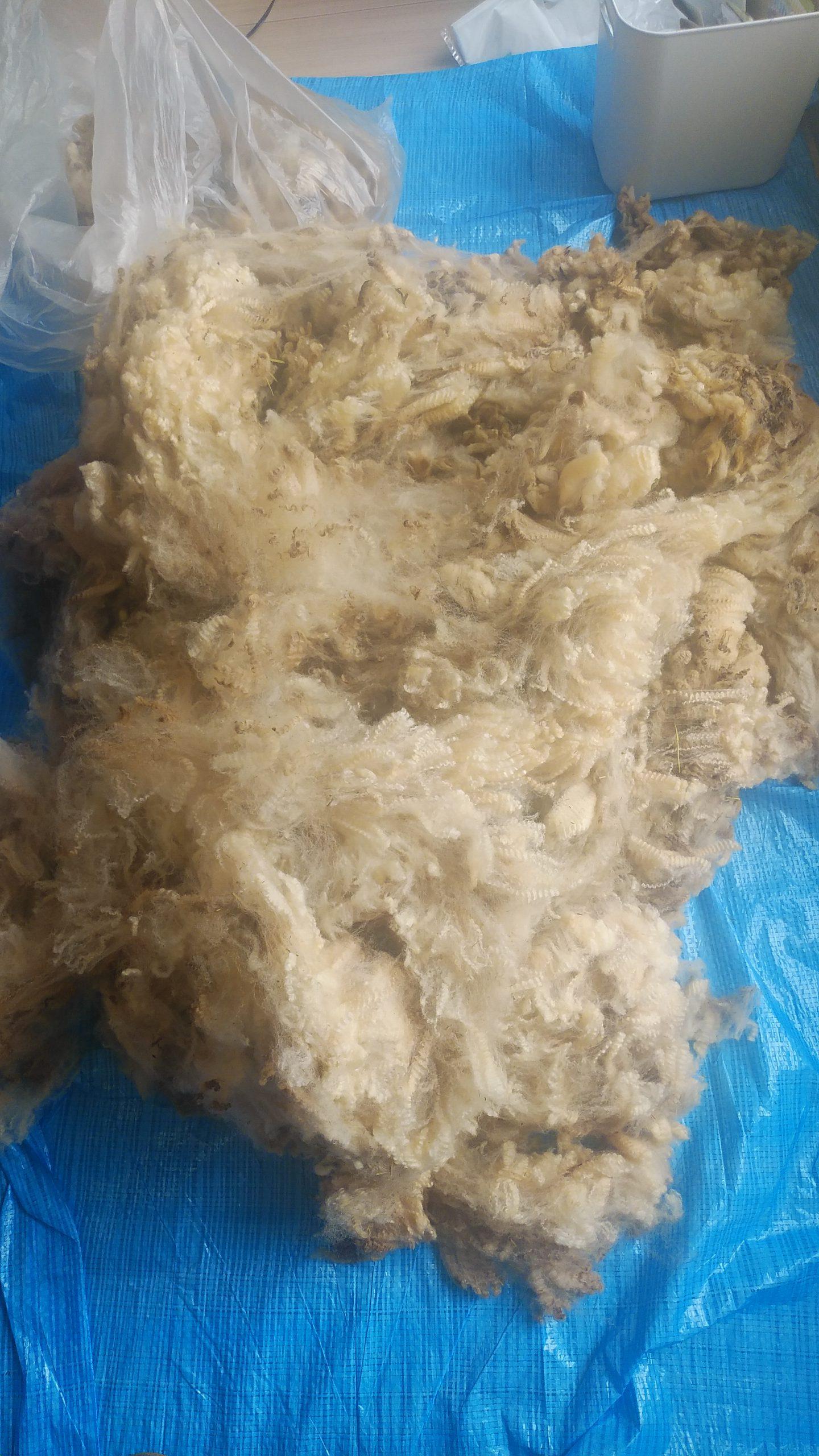 刈った状態の羊毛
